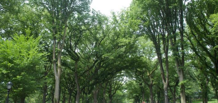 Central Park City